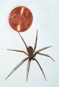 recluse chat sites Live chat submit form customer service digital support  a brown recluse bite can cause the skin at the site of the bite and surrounding area to die and.